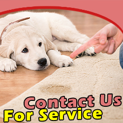 Contact Carpet Cleaning